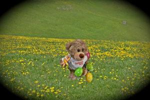 Ostern mit Bär